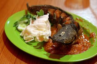 Hukum Makan Ikan Lele Yang Mengkonsumsi Tinja Manusia Sang Pencerah